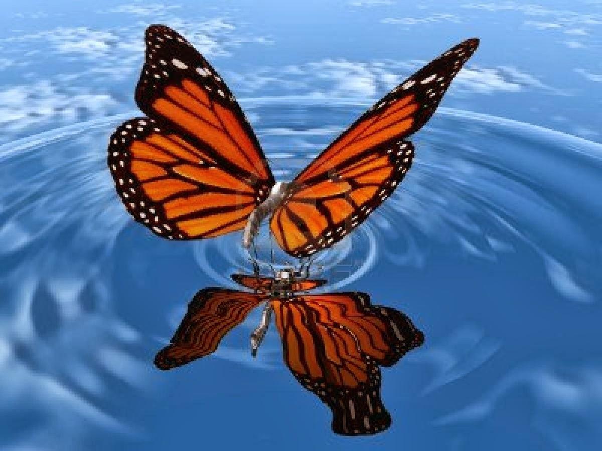 groepsmeditatie, zelfontplooing en sla je vleugels uit