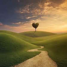 volg je eigen pad